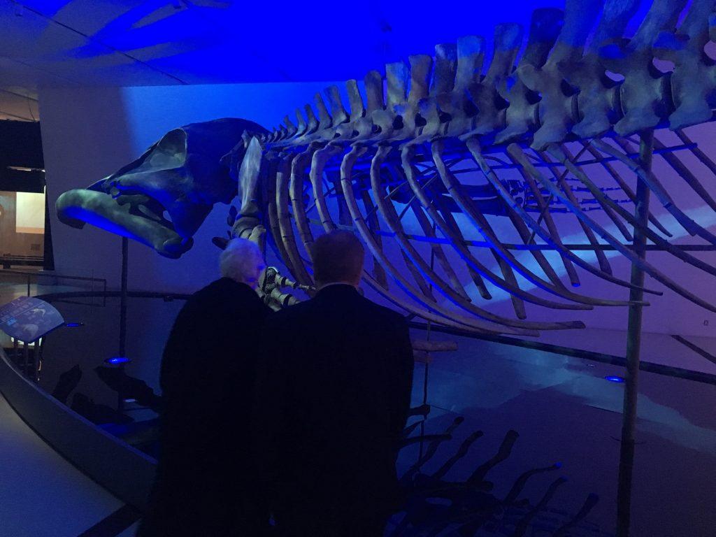 ROM Blue Whale Exhibit